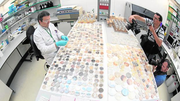 La resistencia a los antibióticos, la gran amenaza del próximo decenio