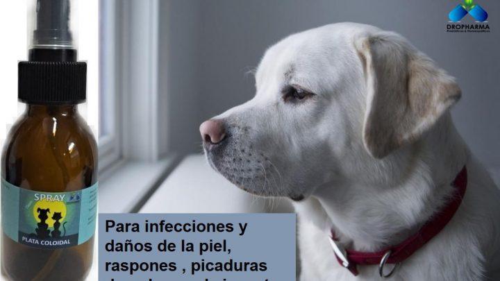 Enfermedades de piel en perros: cinco problemas habituales y sus soluciones