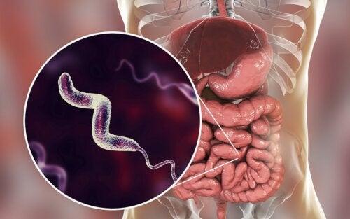 Infecciones por campylobacter: lo que debes saber