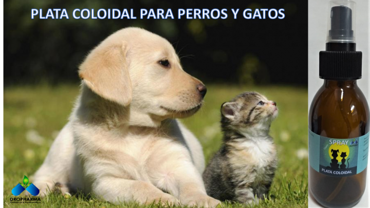Plata coloidal para perros y gatos