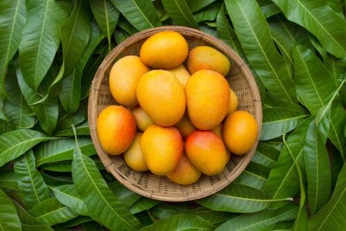6 beneficios de las hojas de mango que posiblemente no conocías