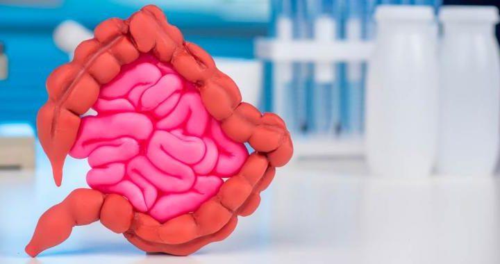Un probiótico creado por el CSIC podría evitar y tratar la obesidad