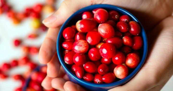 Comer arándanos mejora la salud de los microorganismos intestinales