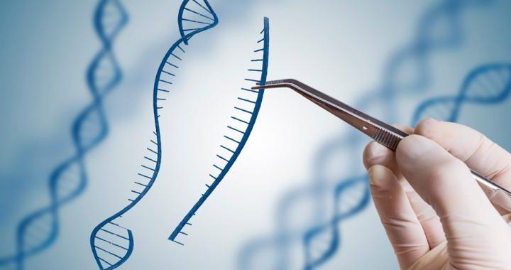 CRISPR, aplicaciones del 'corta y pega' genético